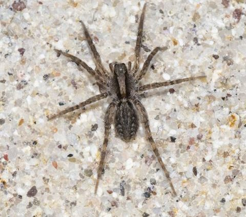 How to Tell What Kind of Spider is in Your House